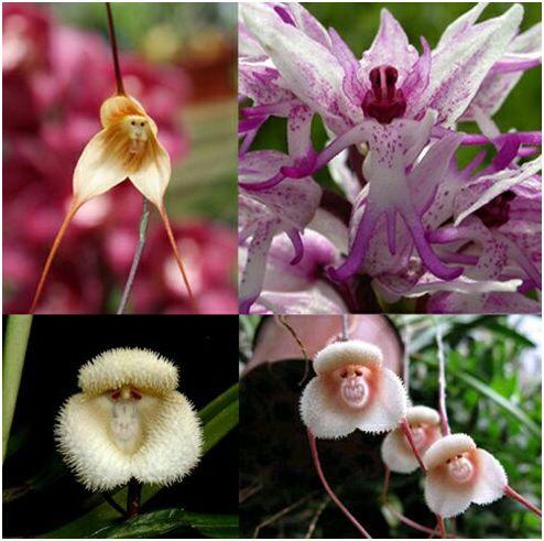 orquidea2