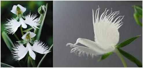 orquidea6