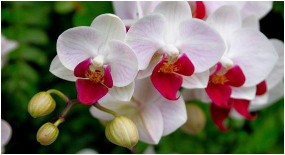 orquidea14