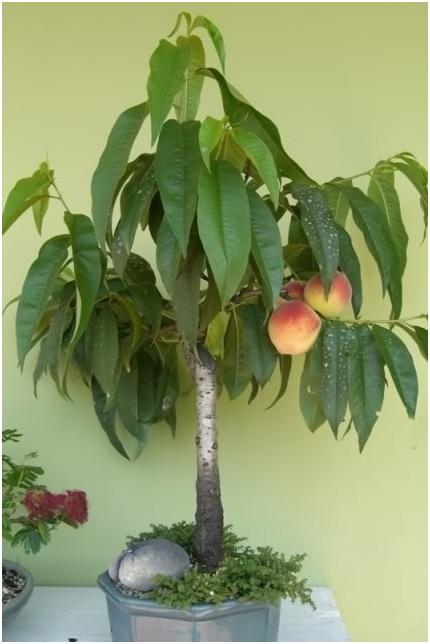 fruti10