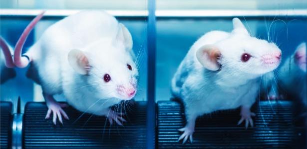 pesquisas-divergem-se-o-sangue-de-ratos-jovens-pode-realmente-ajudar-os-idosos-1479772703330_615x300