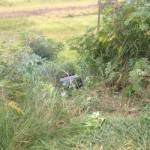 Carro com mulher e bebê perde freio e cai em ribanceira em Apucarana