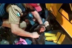 Moça de 19 anos é presa em Rolândia transportando 15 kg de maconha em ônibus